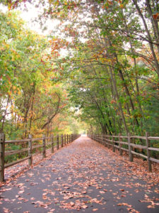 A community walking path that goes through the woods in Farmington CT. Shot during the fall season in New England.