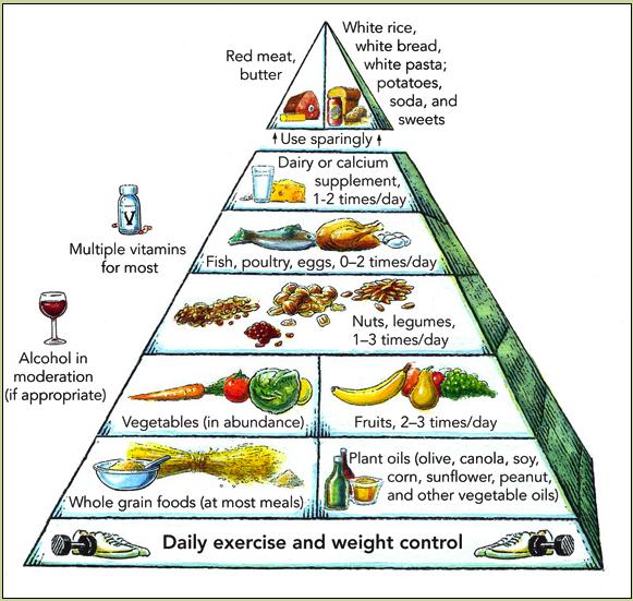 Harvard Med diet pyramid